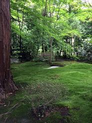 kyoto2014615.jpg