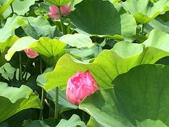 kyoto201462.jpg