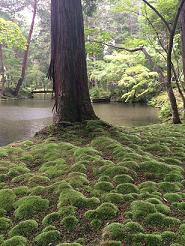 kyoto2014623.jpg