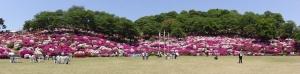 つつじ祭り2