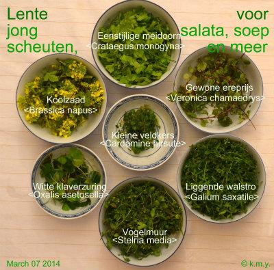 140308 Lente Salata col 10