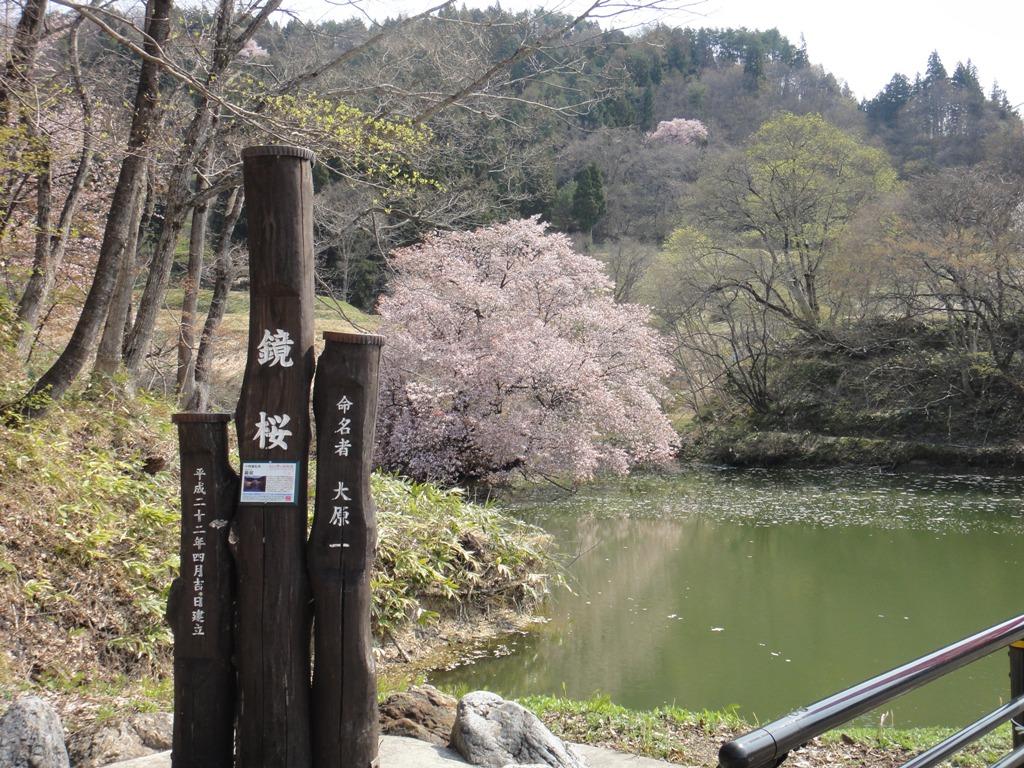 DSC00022鏡桜
