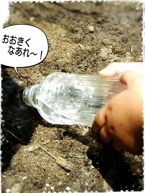水やり加工