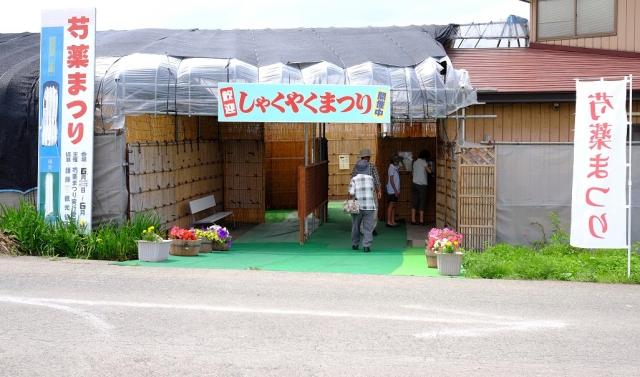 シャクヤク・小町 (2)