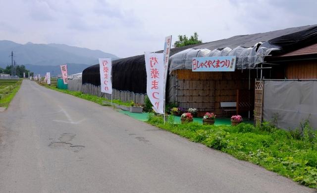 シャクヤク・小町 (1)