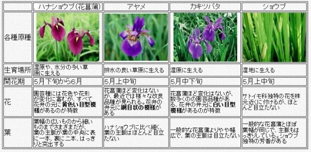 ppop000pppp.jpg