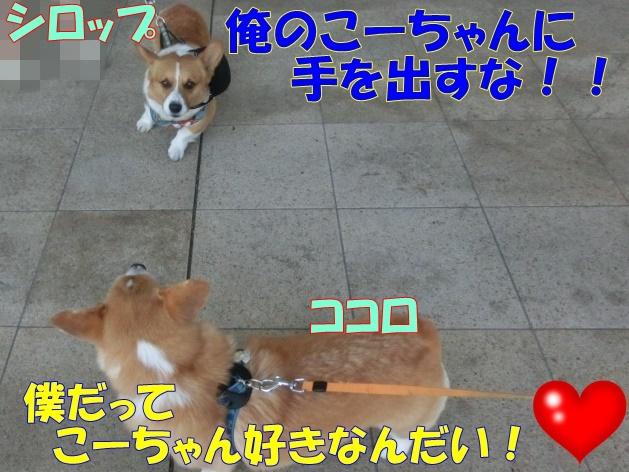 0026_large-crop.jpg