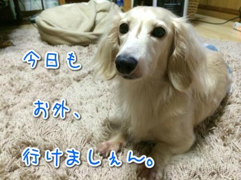 20140810201801.jpg