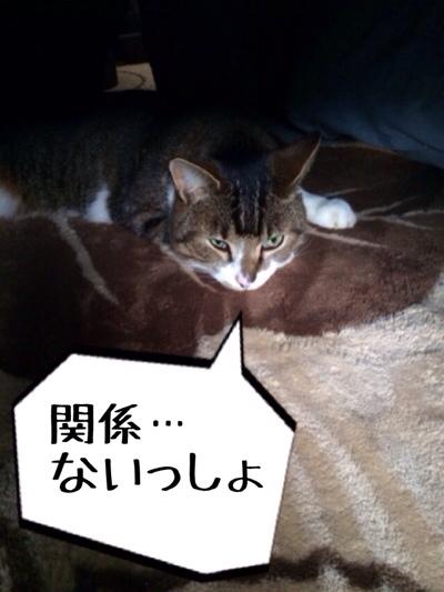 fc2blog_201402231835401a7.jpg