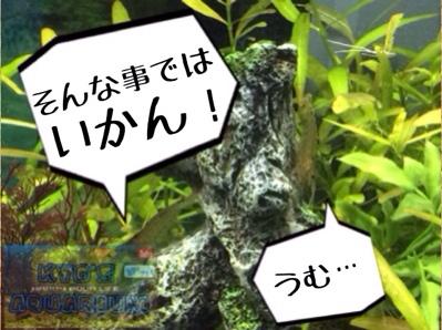 fc2blog_20140322002255516.jpg