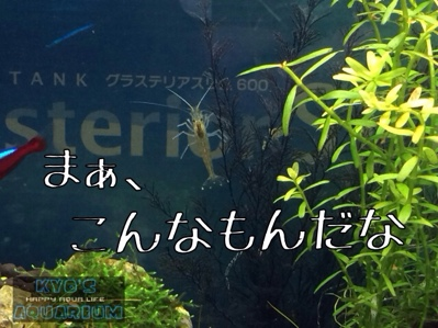 fc2blog_20140330183002803.jpg