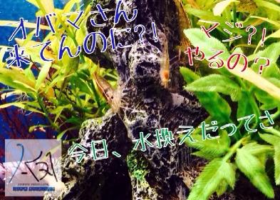 fc2blog_20140423181235c4b.jpg