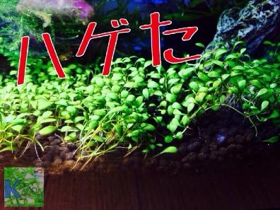 fc2blog_20140518213950e66.jpg