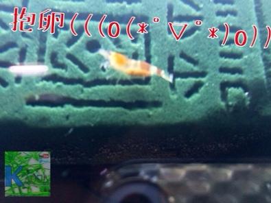 fc2blog_2014052419181623e.jpg