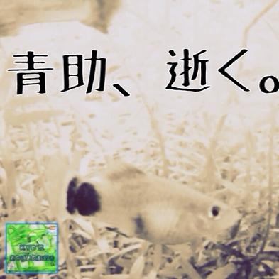 fc2blog_20140605170134a60.jpg