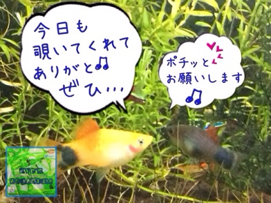 fc2blog_20140605172553cdc.jpg