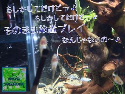 fc2blog_20140709165401a09.jpg