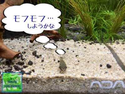 fc2blog_201407091723576cb.jpg
