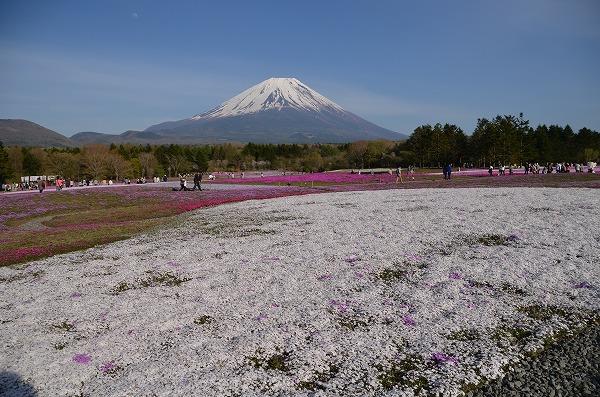 富士山めぐり_140511_5184