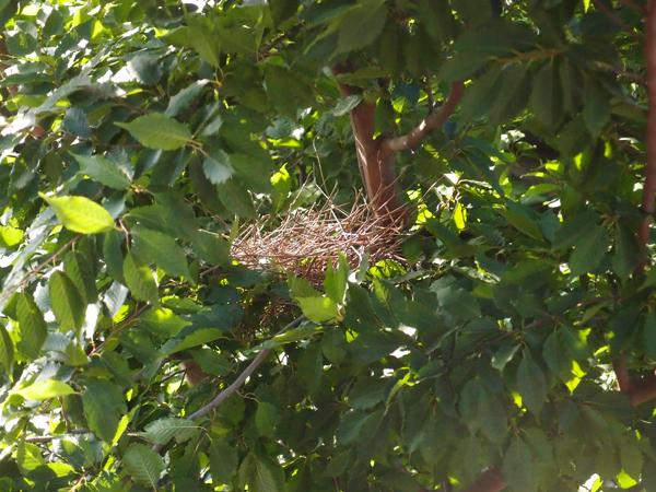 何もない巣