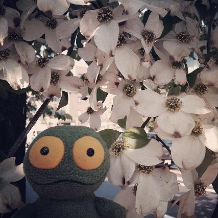 花とケロ (3)
