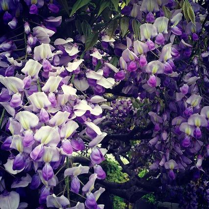 花とケロ (1)