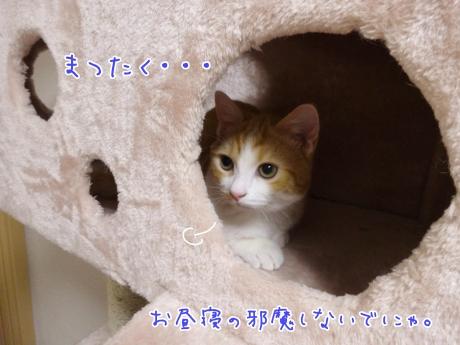 20140329182326d50.jpg