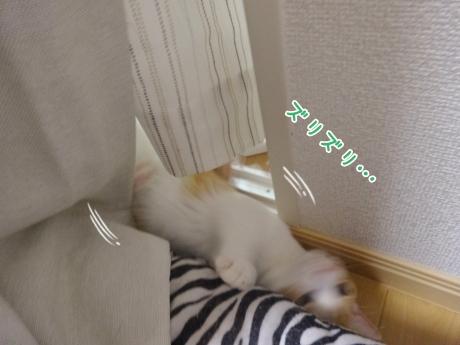 DSC02936134.jpg