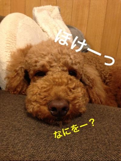fc2blog_20140428172329867.jpg