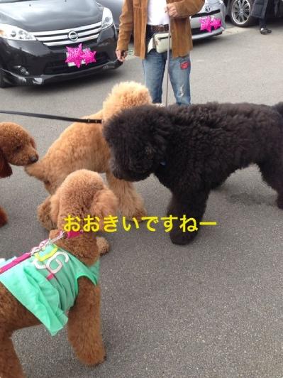 fc2blog_20140505233314e46.jpg