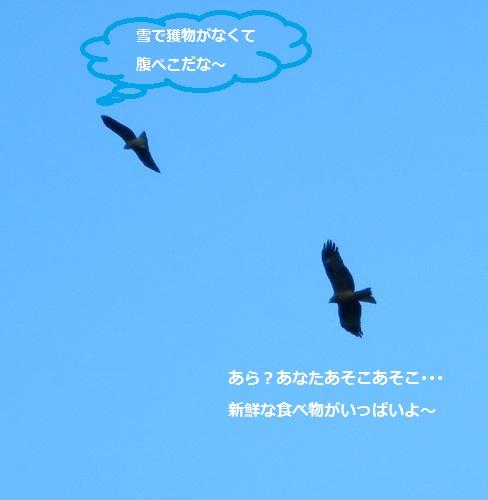 20140221165111356.jpg