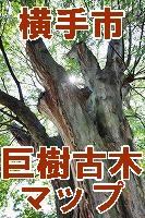 横手市の巨樹・巨木のページ