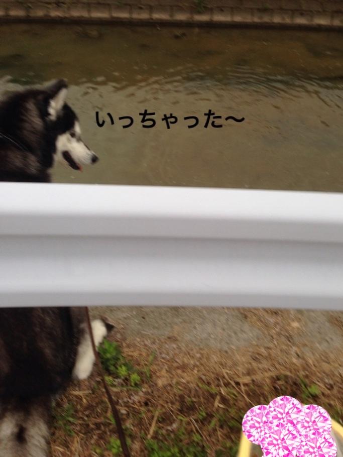 fc2blog_20140522165716939.jpg