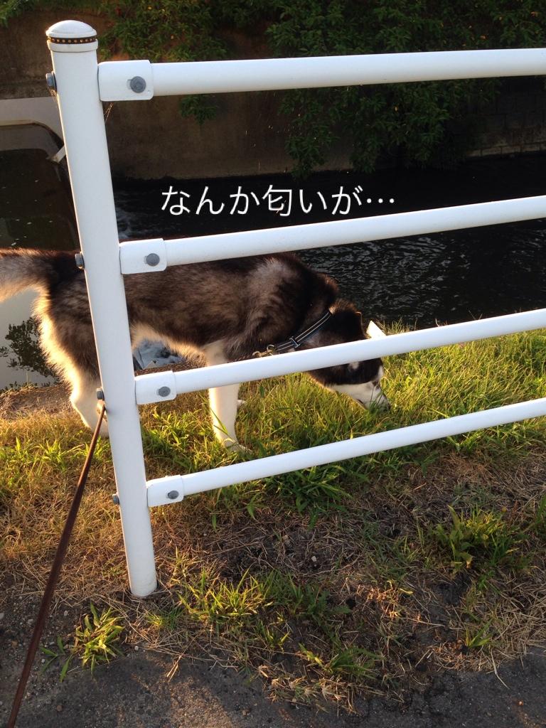 fc2blog_20140801081940859.jpg