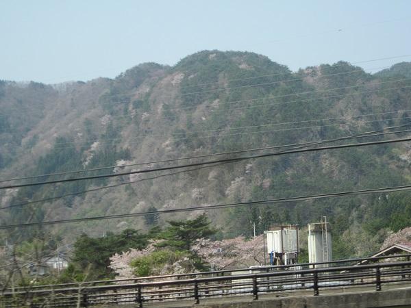桜の風景2