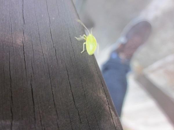 黄色い虫その2