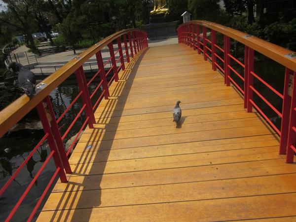 やすらぎ橋を渡る鳩
