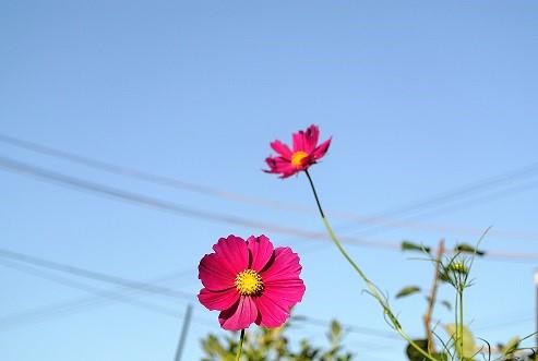 DSC_2889.jpg