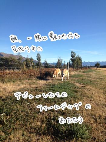 羊の国のラブラドール絵日記シニア!!「おなかのへるうた」写真1