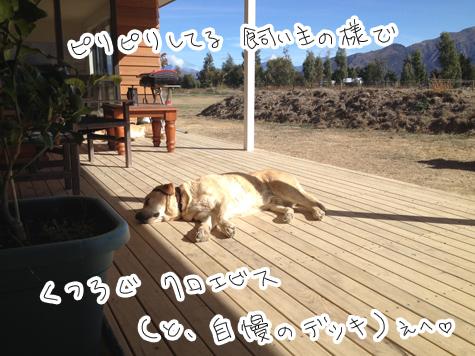 羊の国のラブラドール絵日記シニア!!「おなかのへるうた」写真2