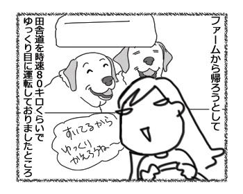羊の国のラブラドール絵日記シニア!!「人生初の!」1