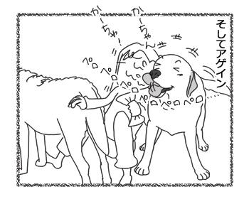 羊の国のラブラドール絵日記シニア!!「まさかな疑惑」4