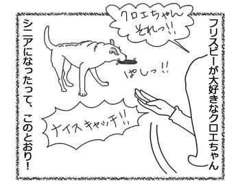 羊の国のラブラドール絵日記シニア!!「フリスビー新ルール」1