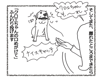 羊の国のラブラドール絵日記シニア!!「フリスビー新ルール」3