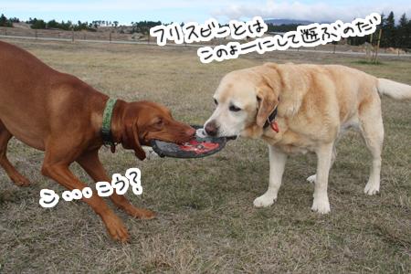 羊の国のラブラドール絵日記シニア!!「三犬三様」写真1