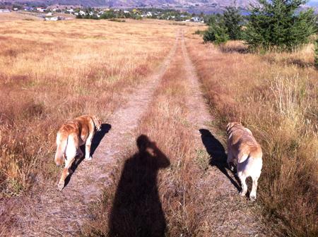羊の国のラブラドール絵日記シニア!!みんなで暑い夏、写真5