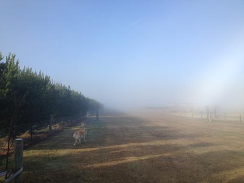 羊の国のラブラドール絵日記シニア!!「雲の中を散歩」2