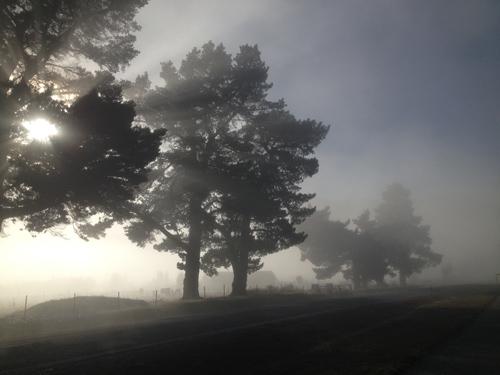 羊の国のラブラドール絵日記シニア!!「雲の中を散歩」5
