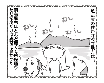 羊の国のラブラドール絵日記シニア!!「台風一過で・・・」2