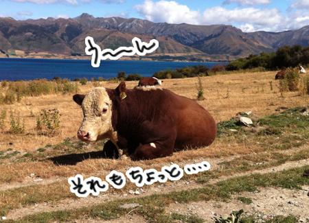 羊の国のラブラドール絵日記シニア!!「命からがら土曜日」3